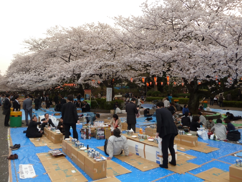 One of the larger parties I came across on my walk in Ueno Park was just starting to sit down and get started.  Notice it is still essential that you take your shoes off.
