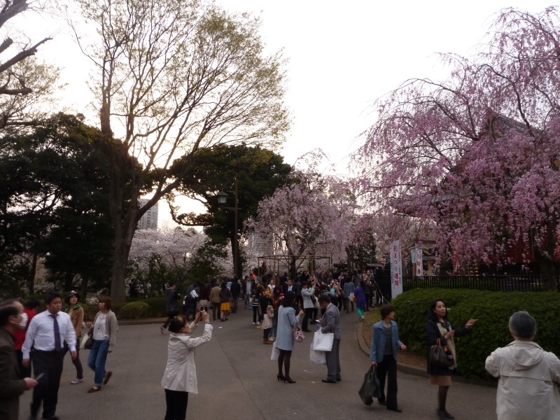 There are always parties on a good day for hanami, but most people relax, take pictures and enjoy the blossoms at their own pace.