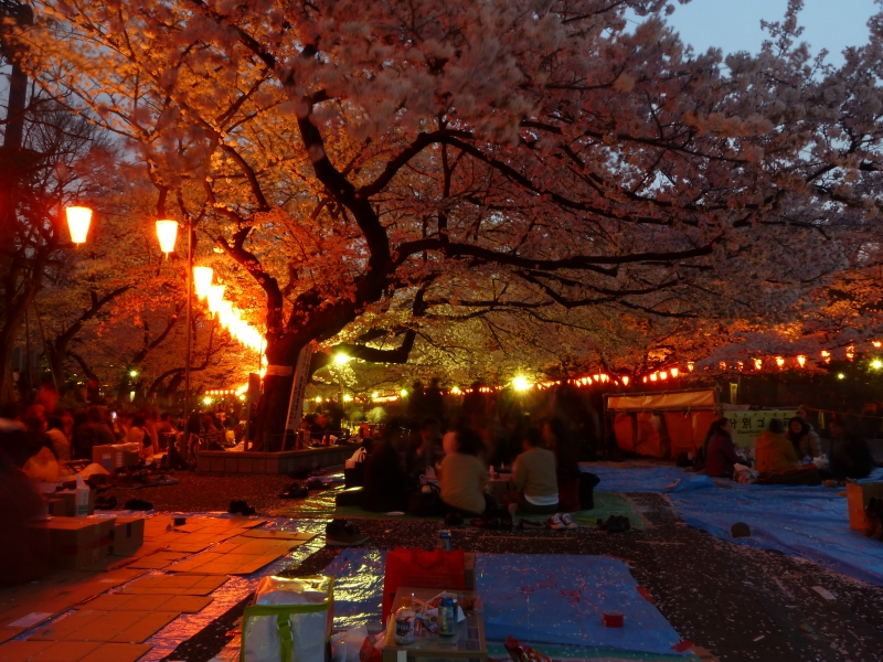 Groups of friends will spend a long time under a good sakura tree, drinking and eating well into evening.