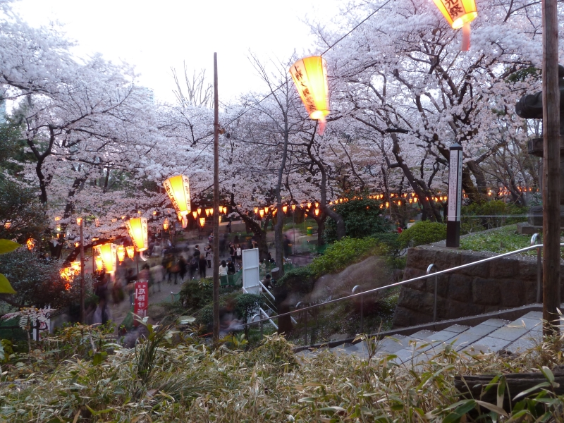 Cherry blossom viewing rarely wraps up before nightfall, and the well know spots usually have fitting lights so everyone can still see the trees.