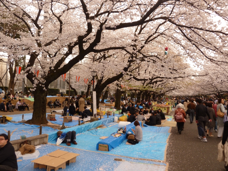 Sure, some of the comforts we are used to simply aren't available, but the scenery at a hanami party is tough to beat.