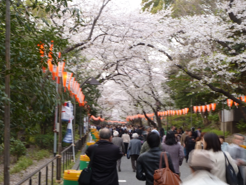 Ueno Park is well deserving of its reputation for great cherry blossom viewing.